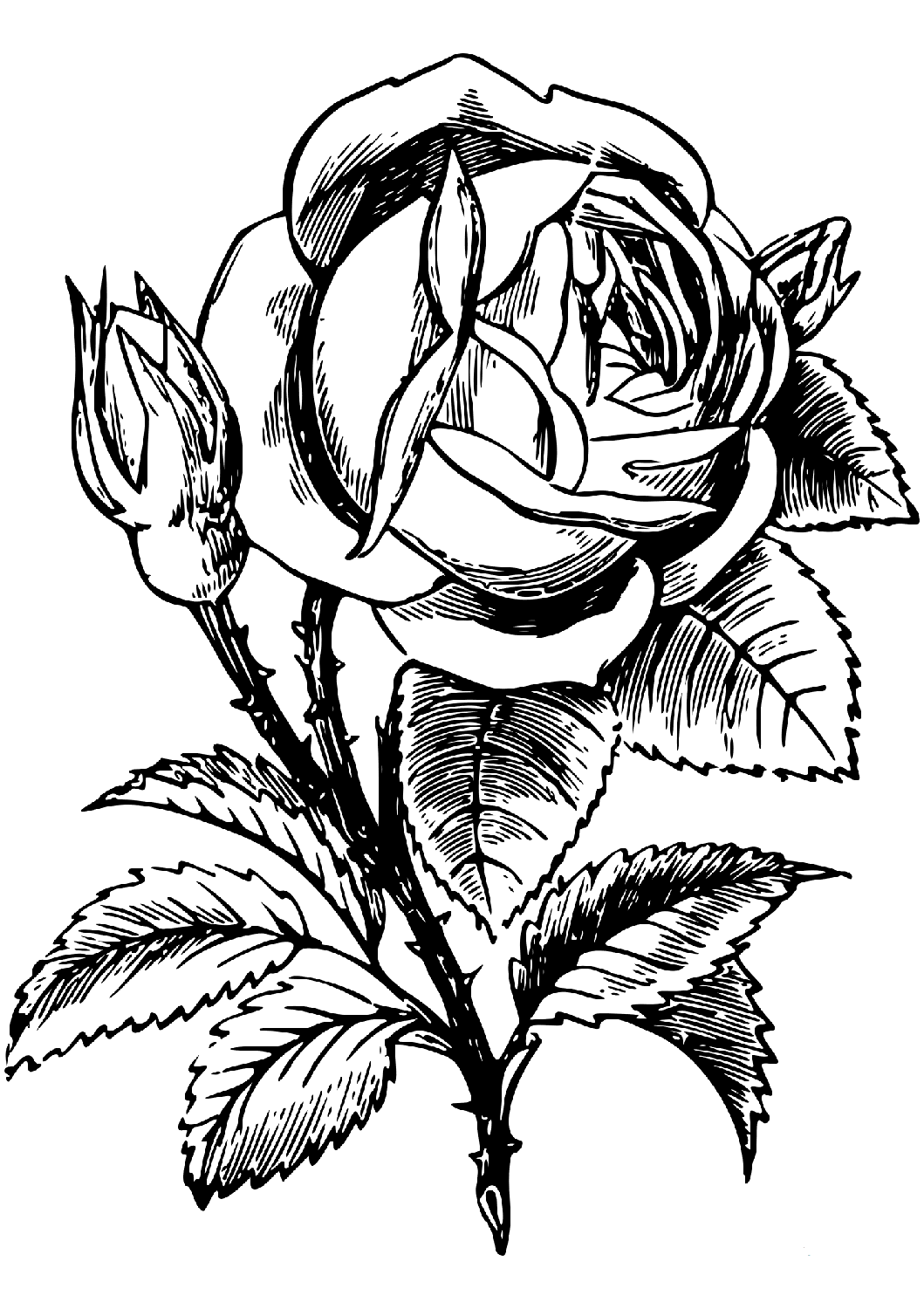 a coloring page of a rose rose color clipart 20 free cliparts download images on coloring rose of a page a