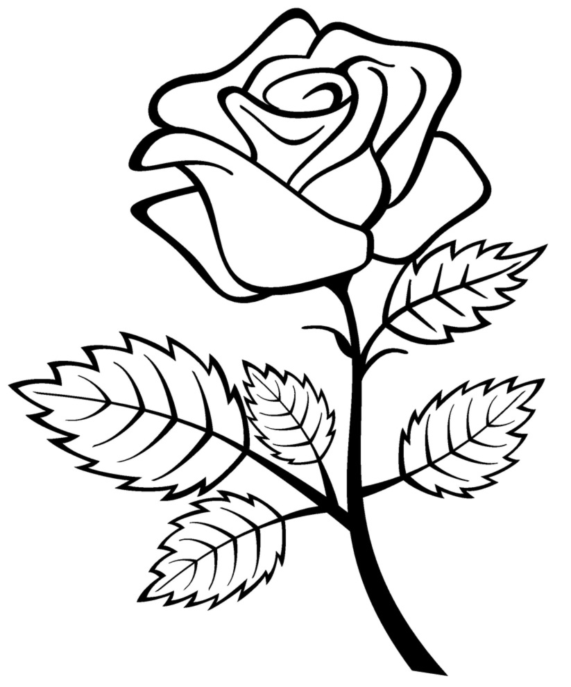 a coloring page of a rose roses coloring pages getcoloringpagescom a page rose coloring of a