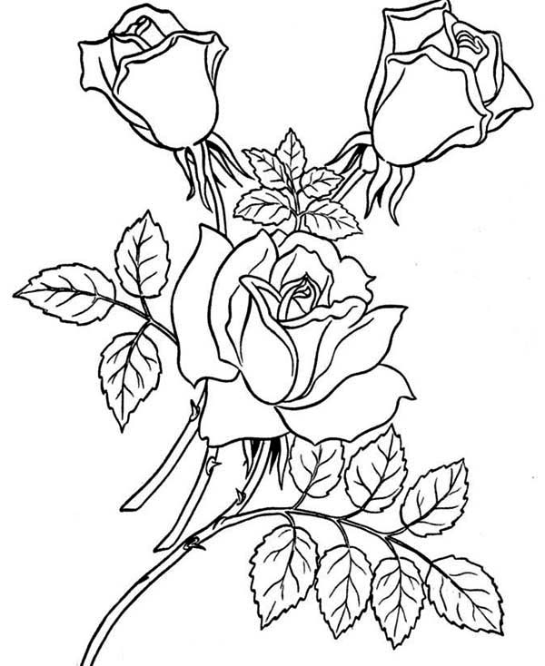 a coloring page of a rose roses coloring pages getcoloringpagescom of coloring a a page rose