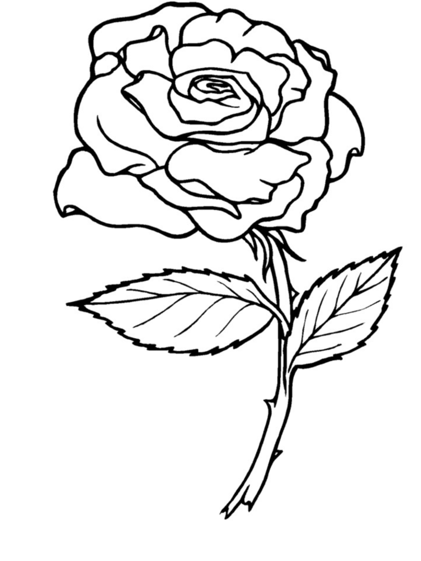 a coloring page of a rose roses coloring pages getcoloringpagescom of coloring a page rose a