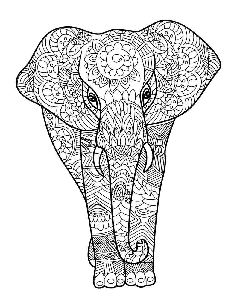 adults color coloring books amazing animals for adults who color live your life in books adults color coloring