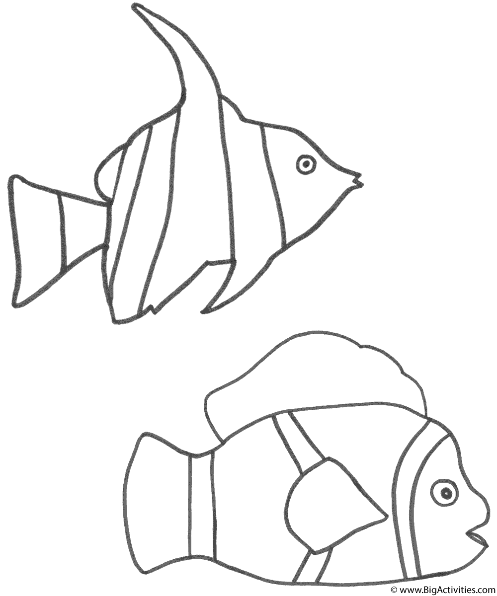 angel fish coloring page angel fish and clown fish coloring page fish angel page fish coloring