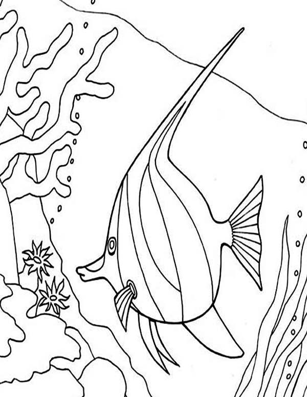 angel fish coloring page angel fish between coral reefs coloring page coloring sky angel page fish coloring