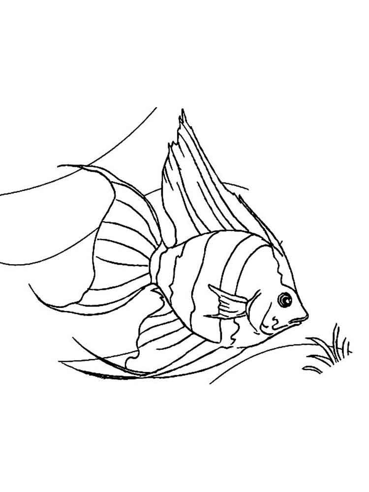 angel fish coloring page angelfish coloring page free other fish coloring pages fish coloring page angel