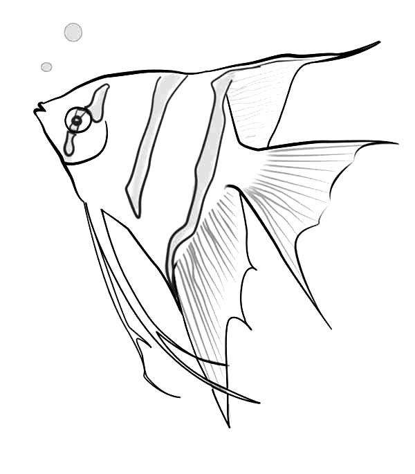angel fish coloring page angelfish coloring pages download and print angelfish fish angel coloring page