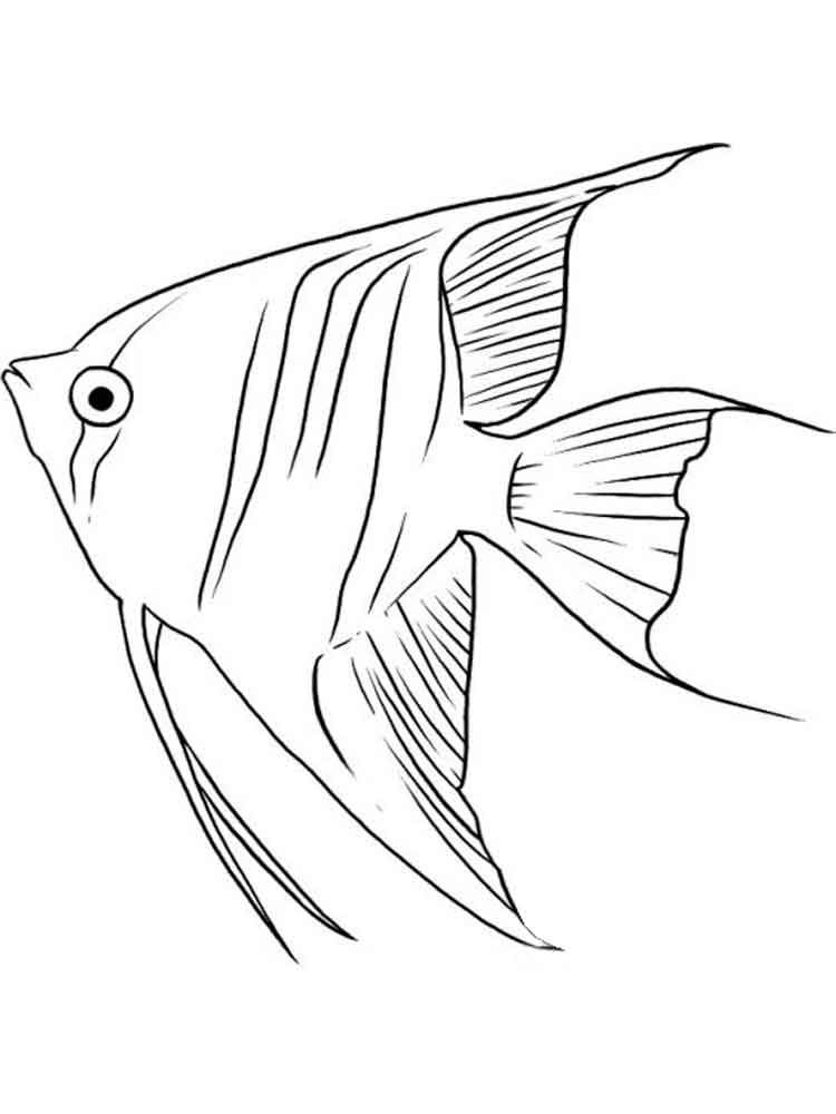 angel fish coloring page angelfish coloring pages download and print angelfish page coloring fish angel