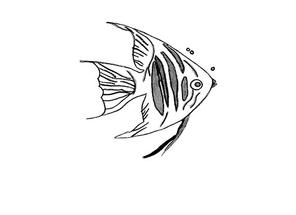 angel fish coloring page beautiful little angel fish coloring page coloring sky coloring fish angel page