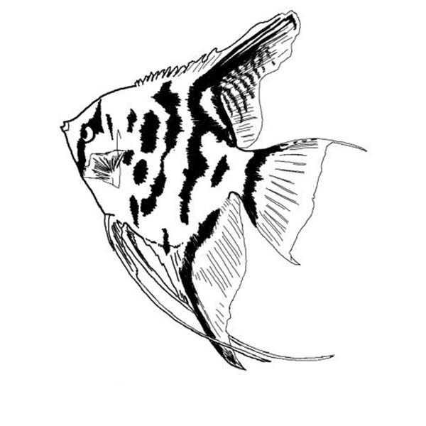 angel fish coloring page coloring pages angelfish coloring page fish page angel coloring