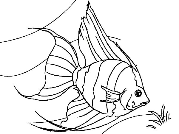 angel fish coloring page coral reef angel fish coloring pages kids play color fish angel page coloring