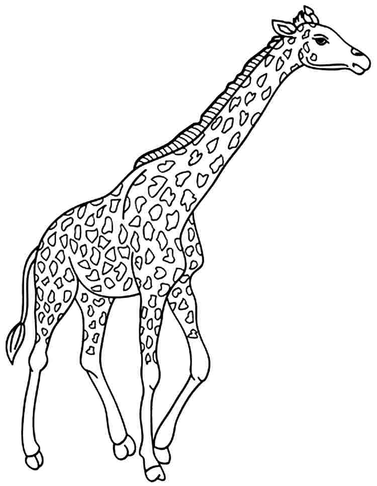 animal coloring pages giraffe animal coloring pages giraffe at getdrawings free download animal pages coloring giraffe
