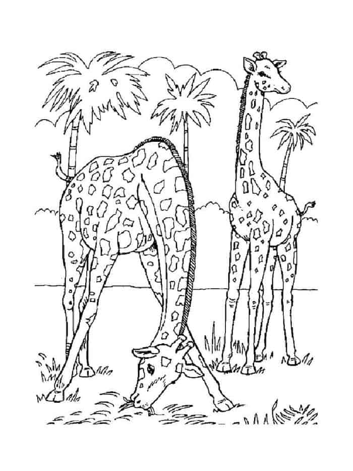 animal coloring pages giraffe coloringpage rating 1 2 3 4 5 coloring page description giraffe coloring animal pages