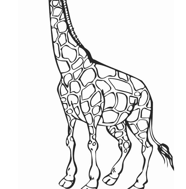 animal coloring pages giraffe free printable giraffe coloring pages for kids giraffe coloring animal giraffe pages
