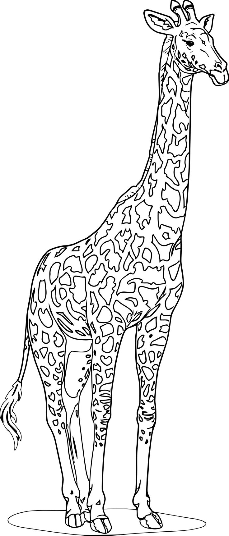 animal coloring pages giraffe get this giraffe coloring pages realistic animals 31794 pages giraffe animal coloring