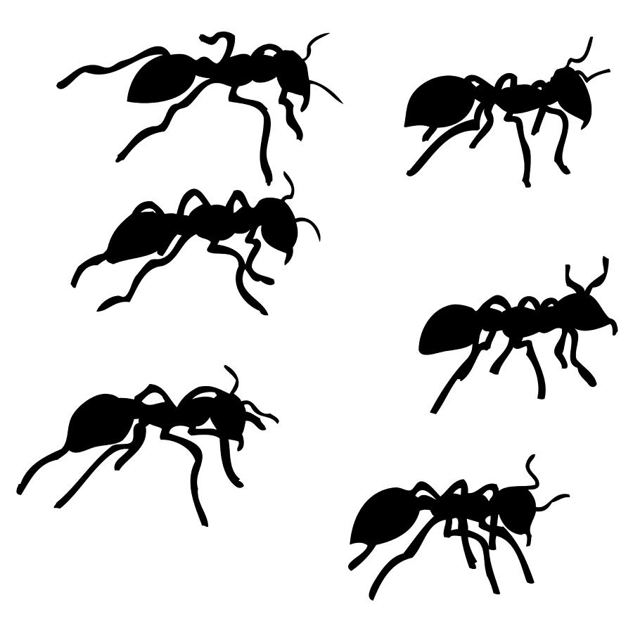 ants drawing 1333 x 750 6 drawing of a realistic ant clipart 180509 ants drawing