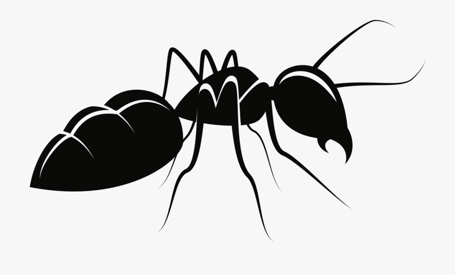 ants drawing ants clip art clipartsco ants drawing