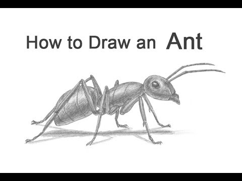 ants drawing how to draw an ant youtube drawing ants