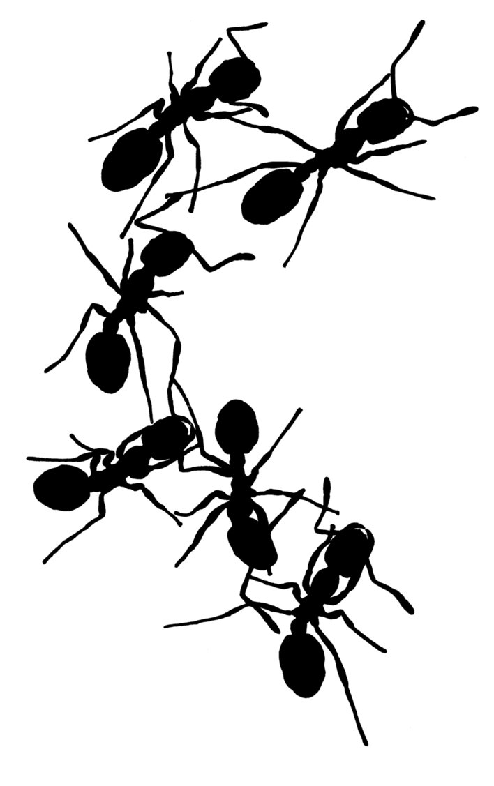 ants drawing so savage the ants drawing by milainesummerset on deviantart ants drawing