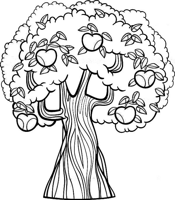 apple tree coloring sheet apple tree pictures to color coloring home coloring apple tree sheet