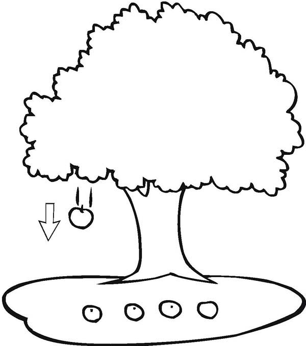 apple tree coloring sheet nature coloring pages for kids printable free sheet apple coloring tree