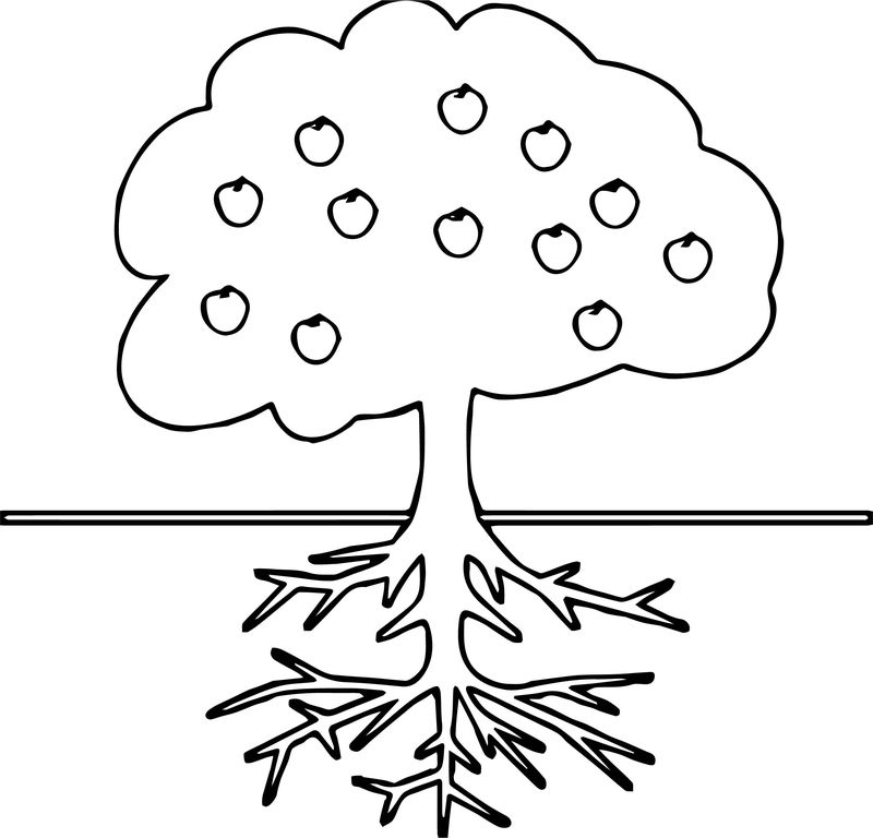 apple tree pictures to color an apple tree coloring page coloringcrewcom tree to apple pictures color