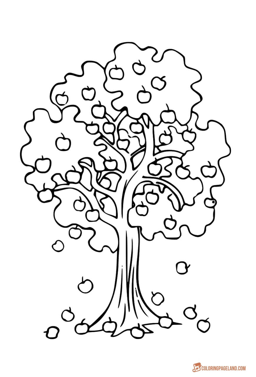 apple tree pictures to color apple tree pictures to color coloring home tree pictures to apple color