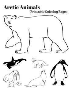 arctic animals coloring pages for preschoolers arctic animals coloring pages by the kinder kids tpt for arctic coloring preschoolers animals pages