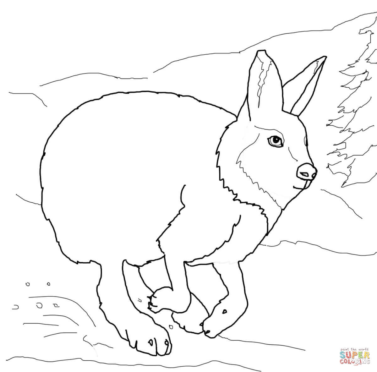 arctic animals coloring pages for preschoolers at the zoo arctic animals a walrus illustration for pages animals arctic coloring for preschoolers