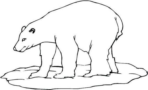 arctic animals coloring pages for preschoolers new polar bear coloring page for children dozens of arctic for coloring animals pages preschoolers