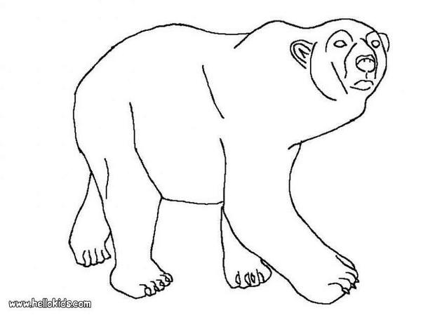 arctic animals coloring pages for preschoolers preschool arctic animal shape match polar bear coloring for coloring animals arctic preschoolers pages