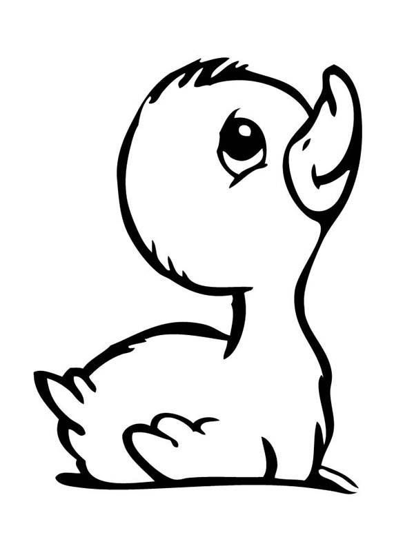 baby duck coloring pages baby ducklings drawing clipart best duck coloring baby pages