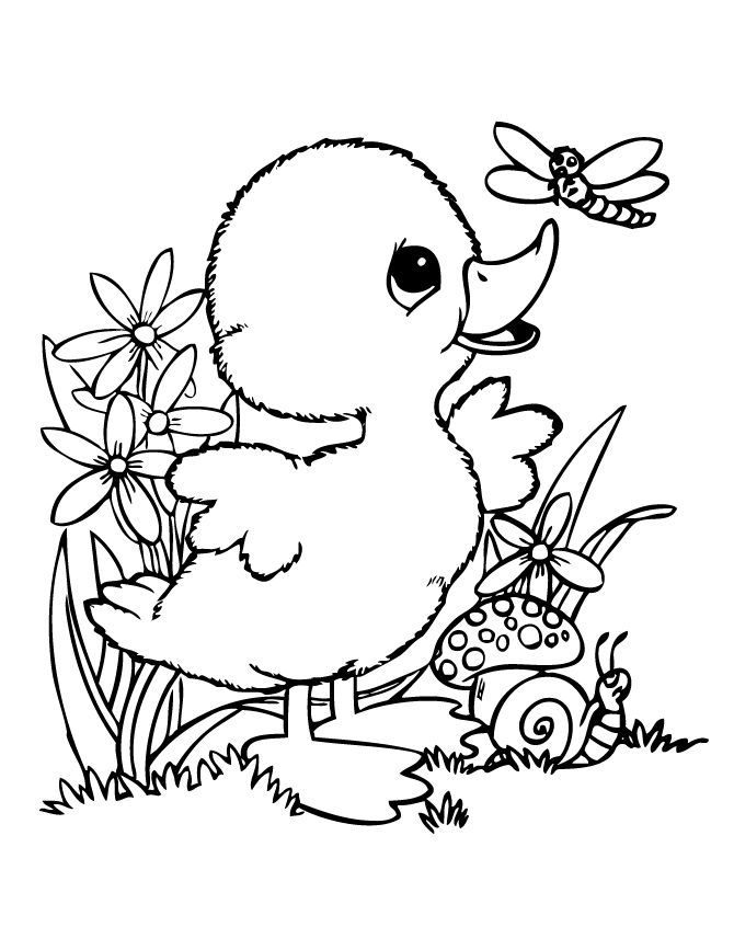 baby duck coloring pages baby ducks coloring pages pictures duck baby pages coloring