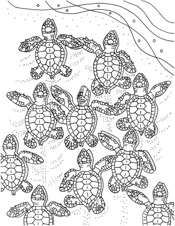 baby sea turtle coloring page baby sea turtle drawing at getdrawings free download turtle sea page coloring baby