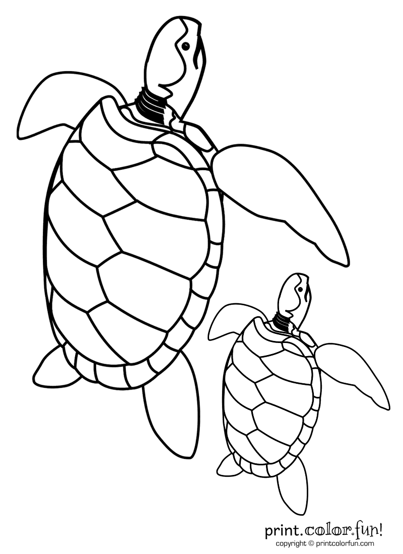 baby sea turtle coloring page baby turtle drawing like wallpapers turtle sea coloring baby page