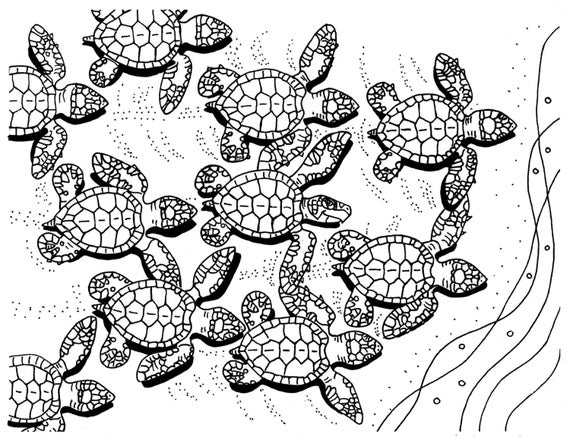 baby sea turtle coloring page baby turtle pages coloring pages sea coloring page turtle baby