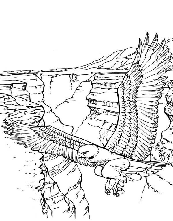 bald eagle coloring pictures bald eagle coloring pages download and print for free coloring bald eagle pictures