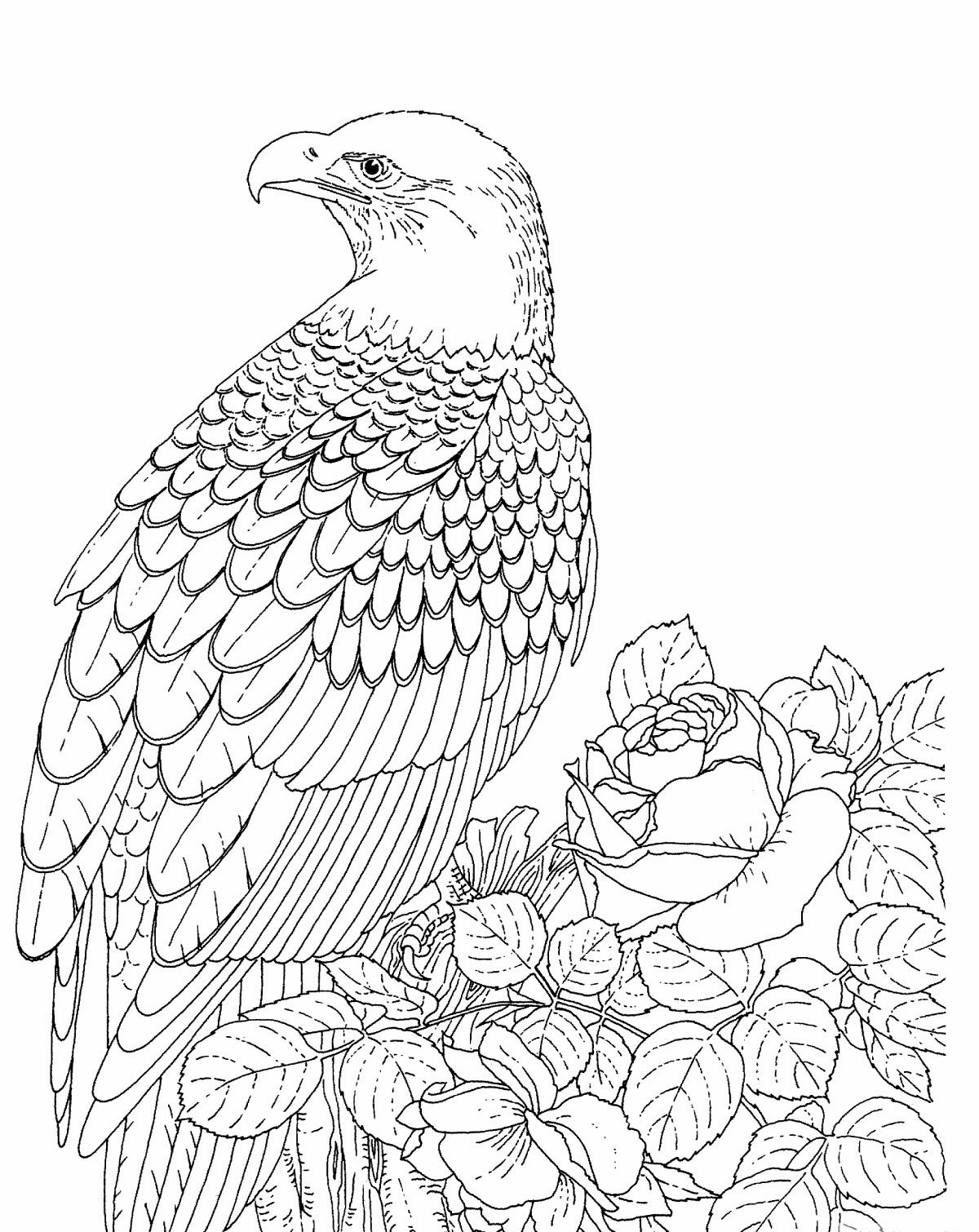 bald eagle coloring pictures eagle coloring pages kidsuki bald pictures coloring eagle