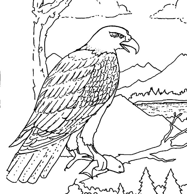 bald eagle coloring pictures eagle soaring drawing at getdrawings free download coloring bald eagle pictures