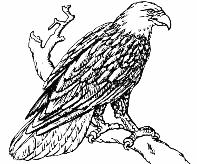 bald eagle coloring pictures free printable bald eagle coloring pages for kids bald coloring pictures eagle