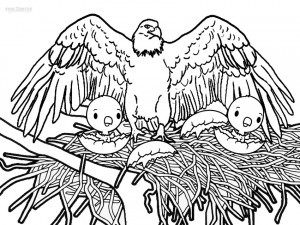 bald eagle coloring pictures printable bald eagle coloring pages for kids bald coloring eagle pictures