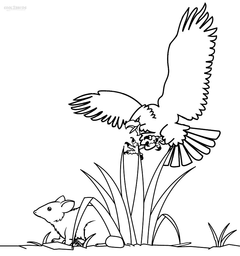 bald eagle coloring pictures rules of the jungle printable pictures of bald eagle coloring bald pictures eagle