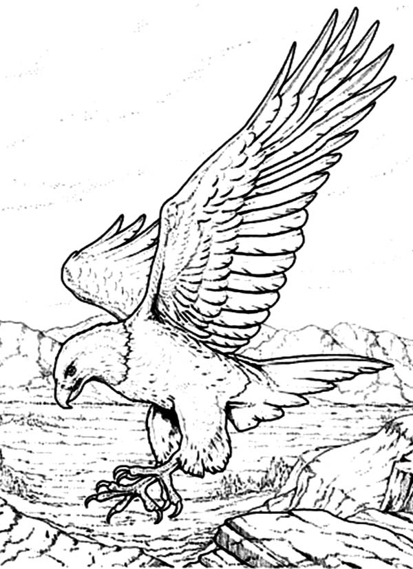 bald eagle coloring pictures this coloring page for kids features a bald eagle just coloring bald eagle pictures