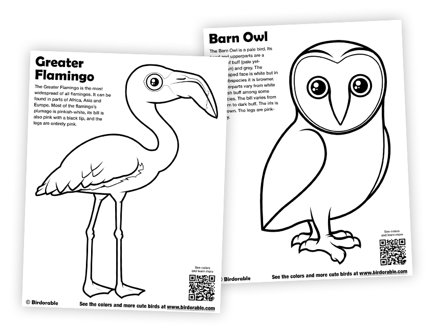 barn owl coloring pages printable best barn owl coloring page mary website printable pages coloring owl barn