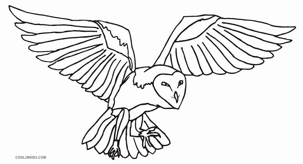 barn owl coloring pages printable free printable owl coloring pages for kids cool2bkids barn pages coloring owl printable