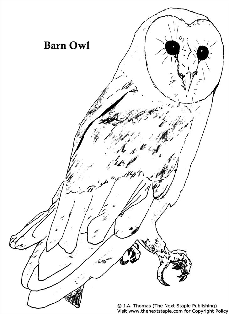 barn owl coloring pages printable free printable owl coloring pages for kids cool2bkids pages coloring owl barn printable