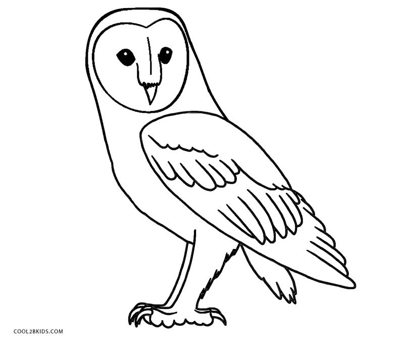 barn owl coloring pages printable owls animal coloring pages pictures coloring owl printable barn pages