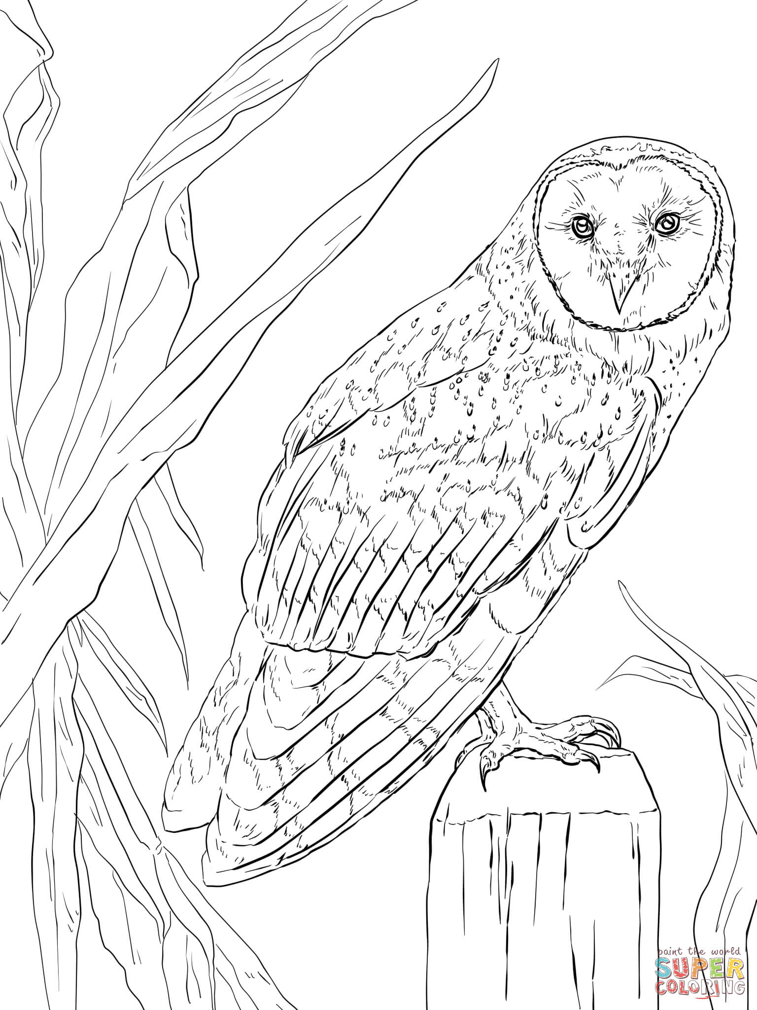 barn owl coloring pages printable perched long eared owl coloring page from owls category coloring printable barn pages owl