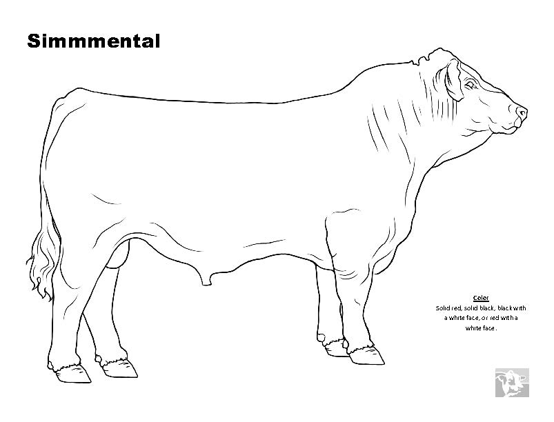 beef cow coloring pages angus beef cow coloring pages coloring pages cow pages beef coloring