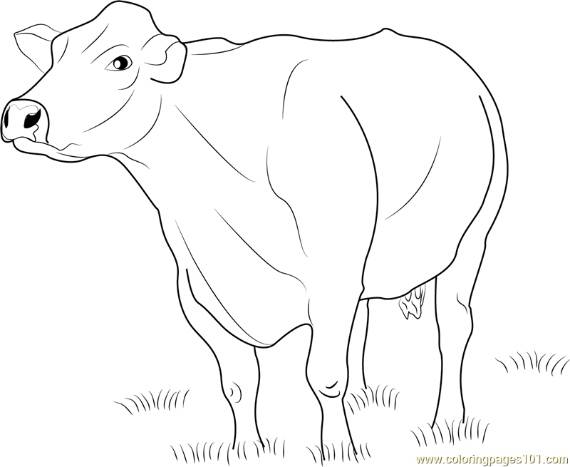 beef cow coloring pages beef cattle pages coloring pages cow coloring beef pages