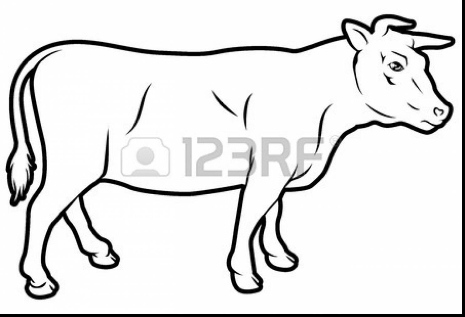 beef cow coloring pages beef cow coloring pages cow coloring pages beef cow cow coloring pages beef