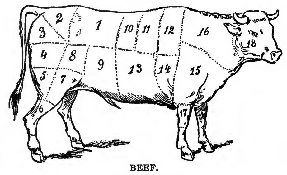 beef cow coloring pages beef cuts coloring pages cow coloring pages beef